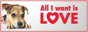 Atlanta Humane Society 2